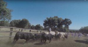 Los toros han mostrado su especial al correr 'en casa' y defender su territorio.