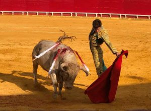Javier Orozco, que repite, lidió el año pasado en Lodosa la novillada de Tomás Prieto de la Cal.