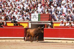 Un toro de Miura de salida en la plaza de Pamplona. Fotografía: Javier Arroyo.